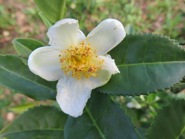blossom-549648_1920